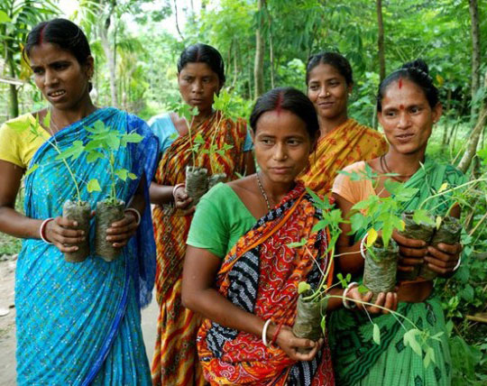 A village in India Plants 111 trees for every new born girl