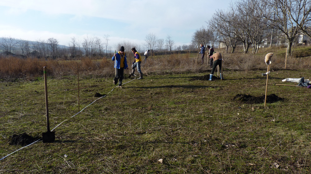 Seed It Forward » Agroforestry initiative – growing trees, organic